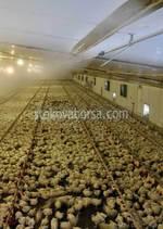 Изработка на селскостопански халета по поръчка