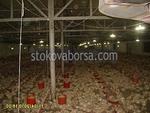 изграждане на птицеферма по поръчка