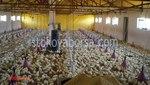 изграждане на птицеферми по поръчка