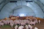 изработване на свинеферми по поръчка