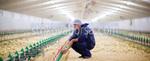 изграждане на метално хале за птицеферма