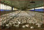 изработване на птицеферма по поръчка
