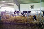 изграждане на кравеферми