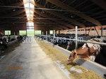 изграждане на кравеферма по поръчка